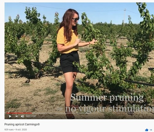 Carmingo® Apricot pruning